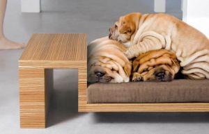 Мебель для собак - фото - 31462