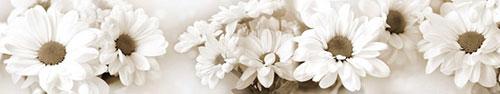 Скинали - Белые ромашки в оттенке сепия