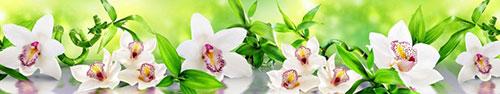 Скинали - Чудесные белые орхидеи с листьями бамбука на зеленом фоне
