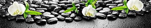 Скинали - Белая орхидея на камнях с каплями воды (избранный фокус)