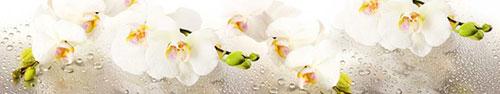 Скинали - Ветки белой орхидеи на поверхности с каплями воды