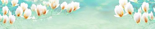 Скинали - Цветы магнолии