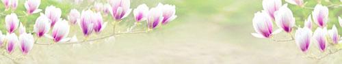 Скинали - Цветы магнолии, светлый фон