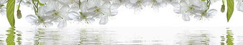 Скинали - Цветение вишни с отражением