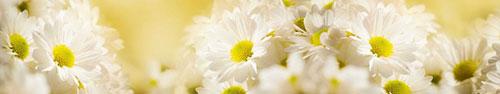 Скинали - Белые ромашки