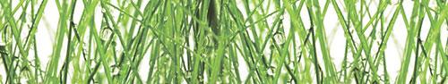 Скинали - Роса на траве