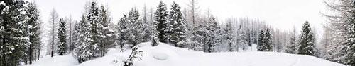 Скинали - Заснеженный лес