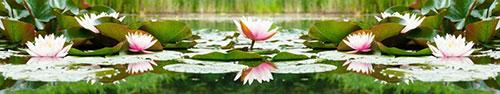 Скинали - Водяные лилии