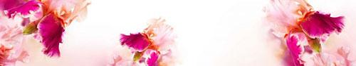 Скинали - Потрясающие пурпурные ирисы на белом фоне