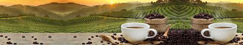 Скинали - Свежий кофе на фоне кофейной плантации