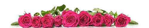 Скинали - Розы на белом фоне