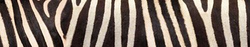 Скинали - Фон полос зебры