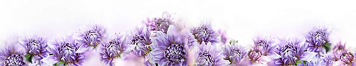 Скинали - Нежные фиолетовые цветы на светлом фоне