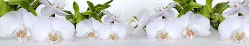Скинали - Нежные белые орхидеи на фоне с бамбуком