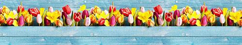 Скинали - Солнечные тюльпаны