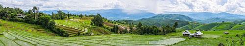 Скинали - Рисовые поля в Таиланде