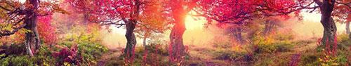 Скинали - Магический лес