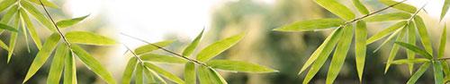 Скинали - Веточки бамбука