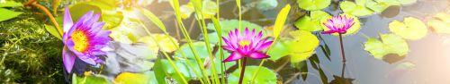 Скинали - Водяные лилии на воде