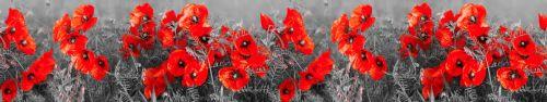 Скинали - Красные маки в черно-белом поле