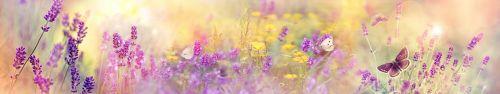 Скинали - Лавандовое поле с бабочками