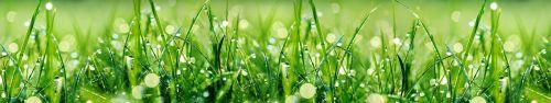 Скинали - Трава с утренней росой