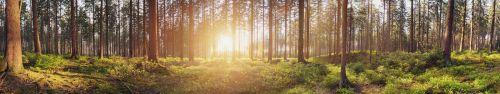 Скинали - Лучи солнца в лесу