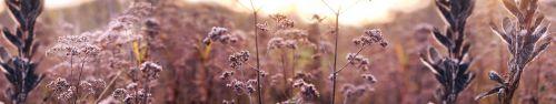 Скинали - Полевые цветы с выборочным фокусом