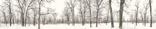 Скинали - Тихий зимний сад