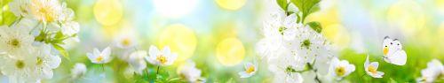 Скинали - Белые цветы и бабочка в солнечный день