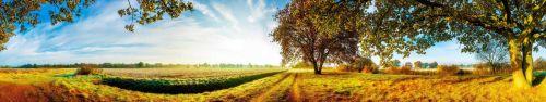 Скинали - Осеннее поле в лучах утреннего солнца
