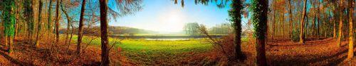 Скинали - Красочная панорама осени в лесу