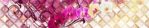 Скинали - Орхидеи разного цвета на абстрактном фоне