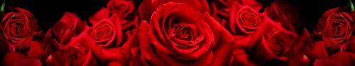 Скинали - Роскошные розы крупным планом с избранным фокусом