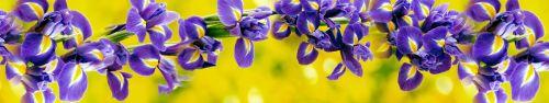 Скинали - Чудесные фиолетовые ирисы