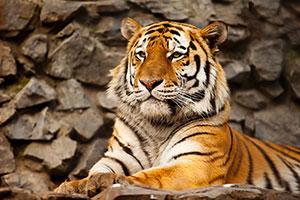 Фотопечать - Животные - 24591
