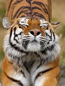 Фотопечать - Животные - 24658