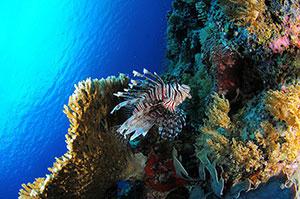 Фотопечать - Подводный мир - 25004