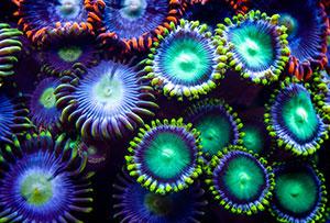 Фотопечать - Подводный мир - 25005