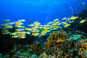 Фотопечать - Подводный мир - 25006