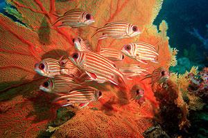 Фотопечать - Подводный мир - 25007