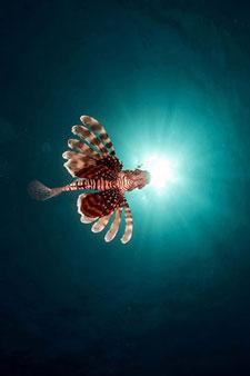 Фотопечать - Подводный мир - 25013