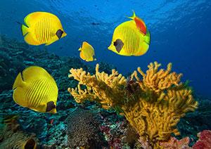 Фотопечать - Подводный мир - 25014