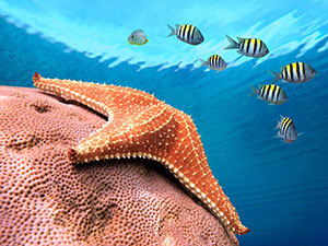 Фотопечать - Подводный мир - 25015