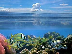 Фотопечать - Подводный мир - 25016