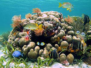 Фотопечать - Подводный мир - 25017