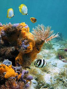Фотопечать - Подводный мир - 25018