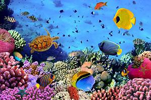 Фотопечать - Подводный мир - 25020