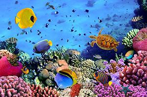 Фотопечать - Подводный мир - 25022