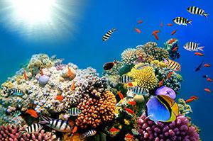 Фотопечать - Подводный мир - 25024